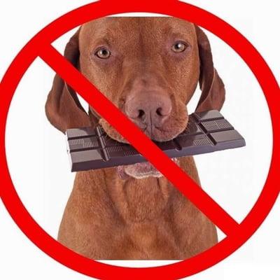 PÁSCOA PET: VETERINÁRIO EXPLICA POR QUE CÃES E GATOS NÃO DEVEM CONSUMIR CHOCOLATE